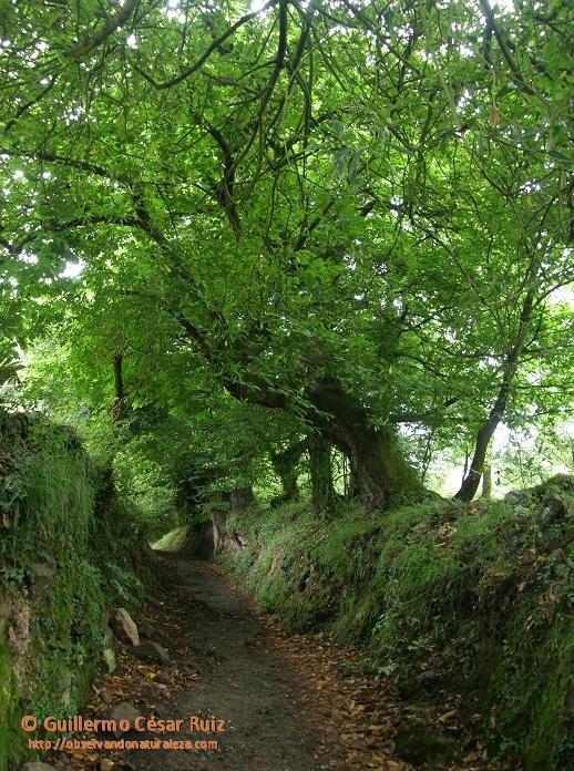 Camin de Naranco a Liño