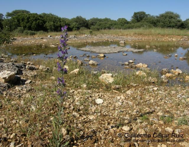 Cantera del agua o Carropluma