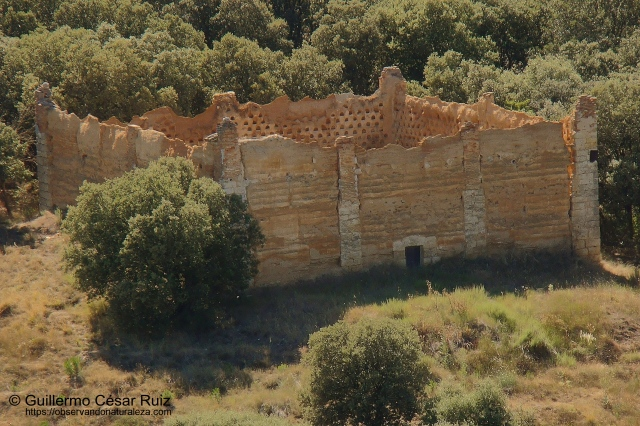 Ruinas palomar de planta cuadrangular