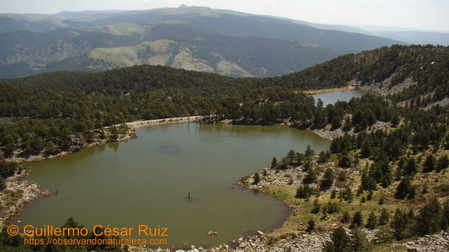 Laguna de los Patos y Laguna Brava, Neila (Burgos)
