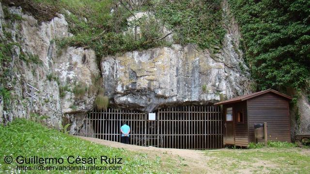 Cueva El Pindal, Pimiangu, Ribedeva