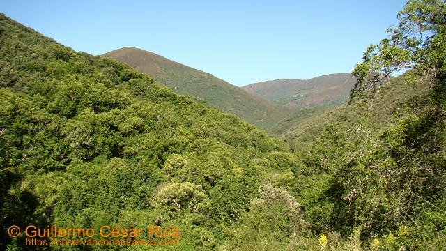 Formigueiros y fragas con carballos da Devesa da Rogueira