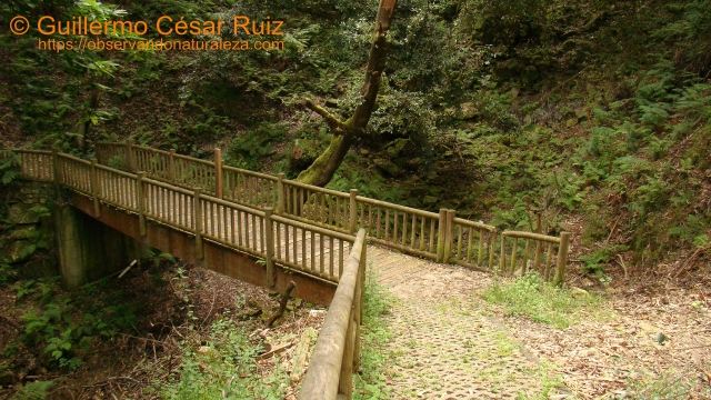 GR-E9 Senda Costera. Puente camino a ruinas del Monasterio Santa María de Tina Mayor