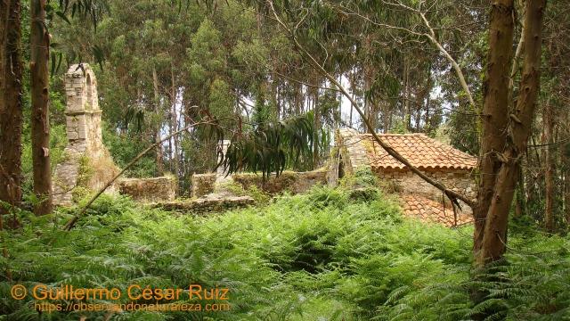 Monasterio de Santa María de Tina, ruinas, Pimiangu, Ribedeva