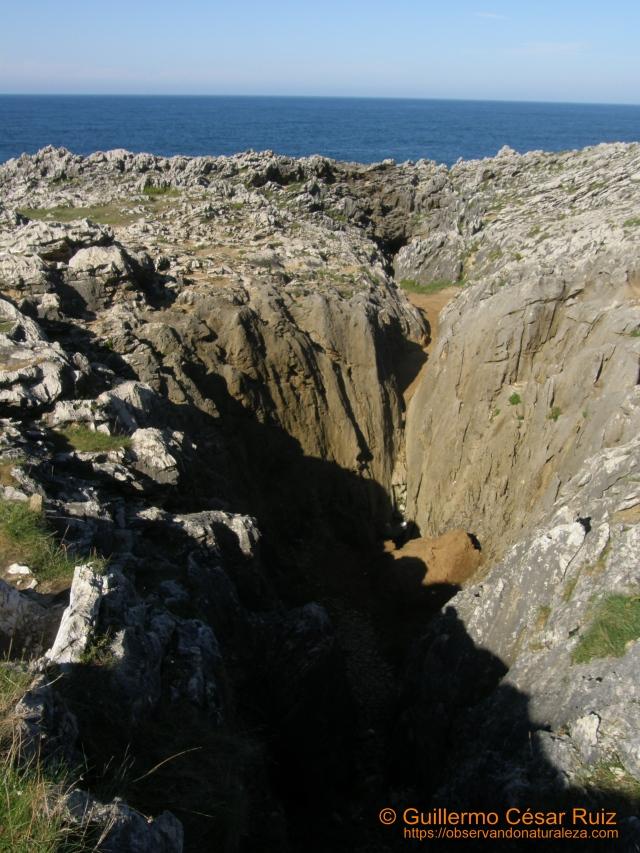 Bufón de Arenillas, Puertas de Vidiago (Llanes-Asturias)