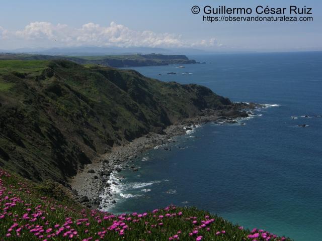 Playa Carrera, Ferrero (Gozón-Asturias)