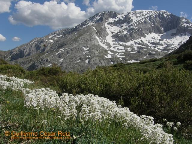 El Espigüete desde la Majada Cimera, Senda Cascadas del Mazobre