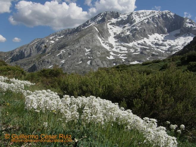El Espigüete desde la Majada Cimera, Senda Cascadas del Mazobres