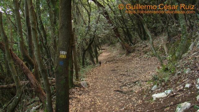 Caminando entre la espesura del encinar cantábrico por el Monte Buciero, Santoña