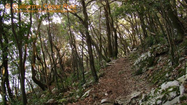 Encinar cantábrico, Monte Buciero, Santoña