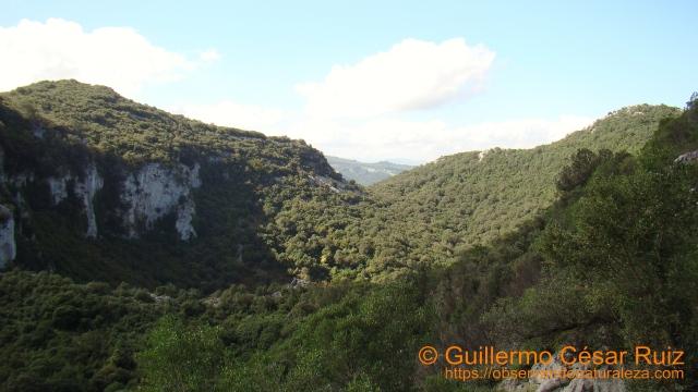 Hoya Cobañera, ascendiendo hacia el Monte Candina