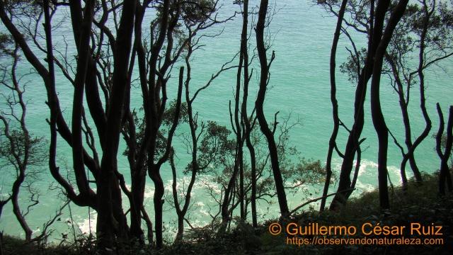 Mar de aguas cristalinas azul turquesa entre encinas desde Monte Buciero, Santoña
