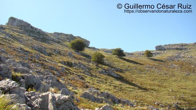 Monte Candina, hayas sobreviviendo al borde del Mar Cantábrico