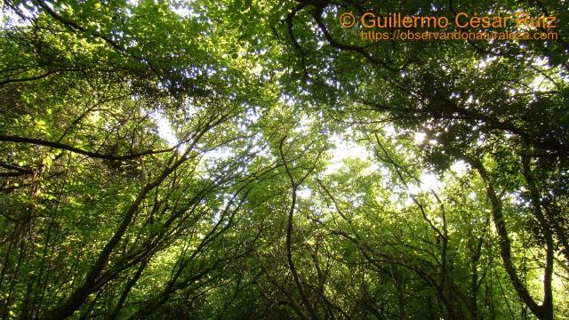 Valle de los Avellanos, Camino de las Minas, Monte Buciero, Santoña