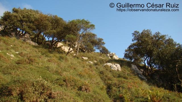 Vista atrás. Descenso de la cumbre del Buciero hacia Santoña