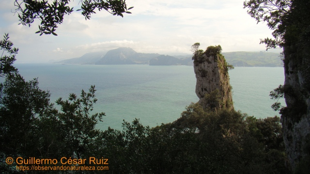 Vista hacia Monte Candina, Ensenada de la Yesera, La Peña en el descenso al Faro del Caballo, Monte Buciero, Santoña