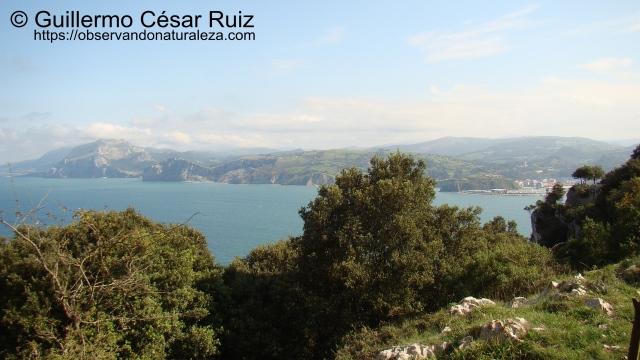 Vistas hacia Laredo, Ensenadas del Erillo y la Yesera, Monte Candina desde el Camino del Acantilado, Monte Buciero, Santoña