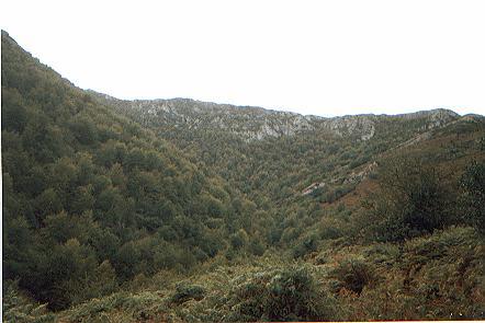Xerra Peña Collada (vista del fayéu a los pies de la Xerra de Sobia)