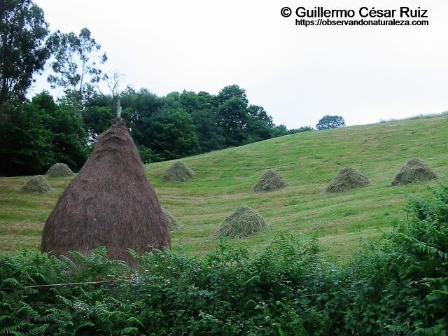 Balagu o balagar y facinas en Les Cabañes