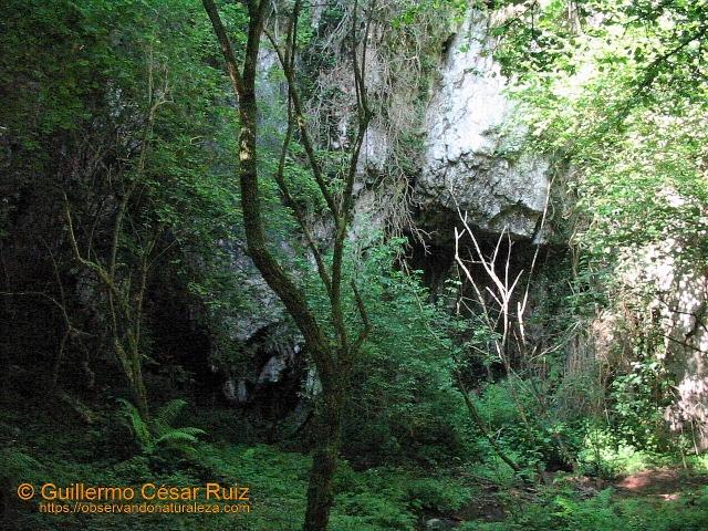 Cueva La Llosa o Los Borrones-El Pebidal
