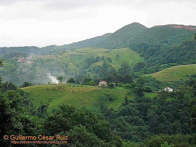 Cara norte delNaranco en el 2005 desde el Monte La Meredal, con vistas a Guindalorio,Lladines y Cantu Los Corralones o Navalones con Folgueres al fondo.