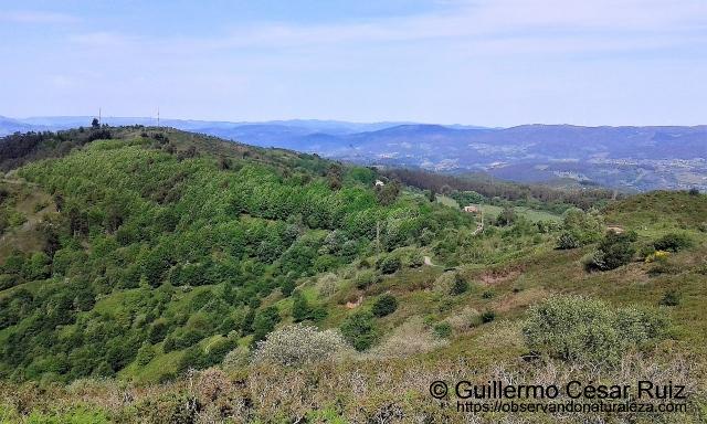 Repoblaciones en Campu La Vara, entre El Pebidal, Cantu de Borbotón y Altu La Rasa o Roza