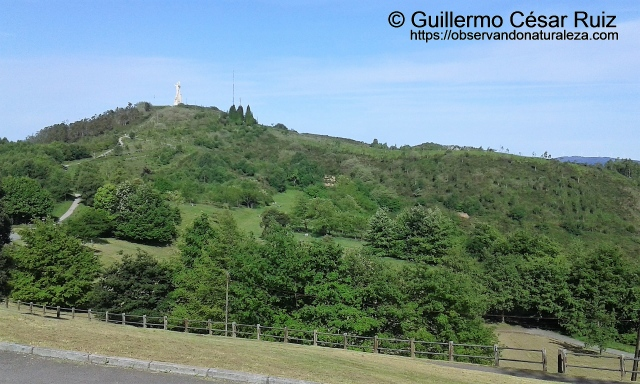 Repoblaciones forestales efectuadas en Monte Altu o Campo de los Jardines y Picu'l Paisano