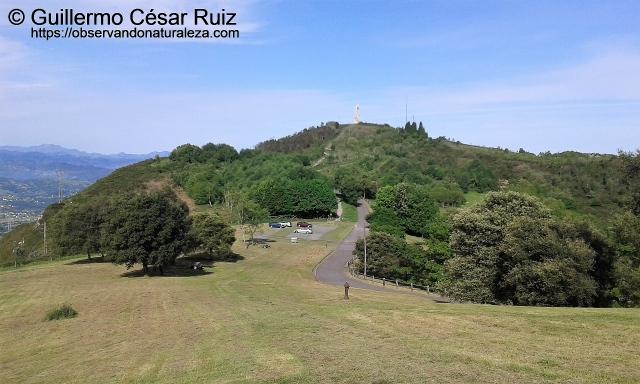 Área Recreativa de Monte Altu o Campo de los Jardines. Repoblaciones entorno al Picu Pozu L'agua o La Miliciana y Picu'l Paisano