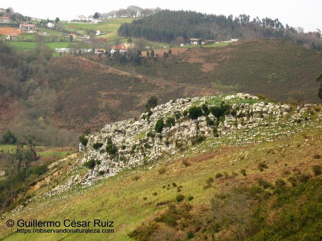 Afloramiento calizo de la formación Moniello en contacto con el Complejo de Rañeces en Rodiella, Naranco, Uviéu/Oviedo