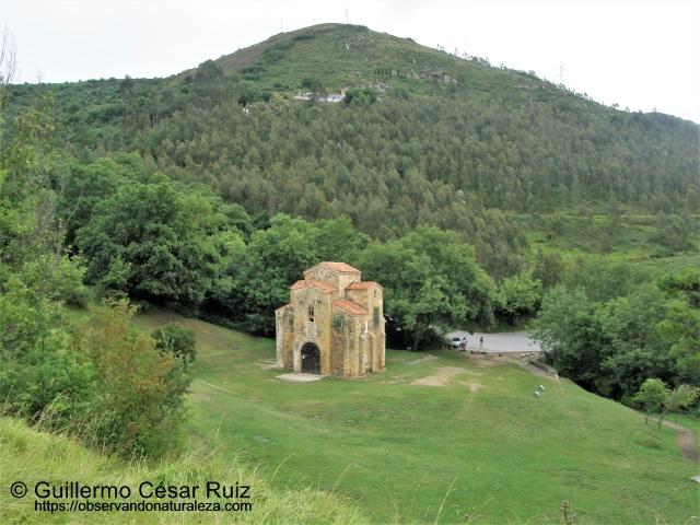 Plantaciones de ocalitos tras San Miguel de Liño
