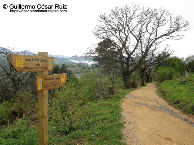 Senda transversal Naranco-Nora. Tramo El Pedreru-San Pedro de Nora.