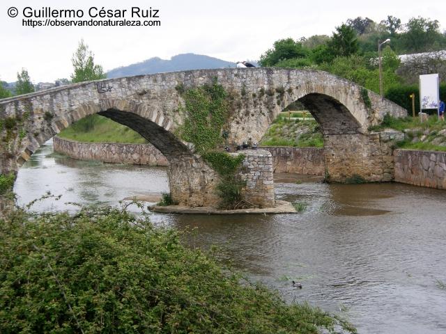 Senda transversal Naranco-Nora. Ponte Vieyu/Puente Viejo, Llugones/Lugones